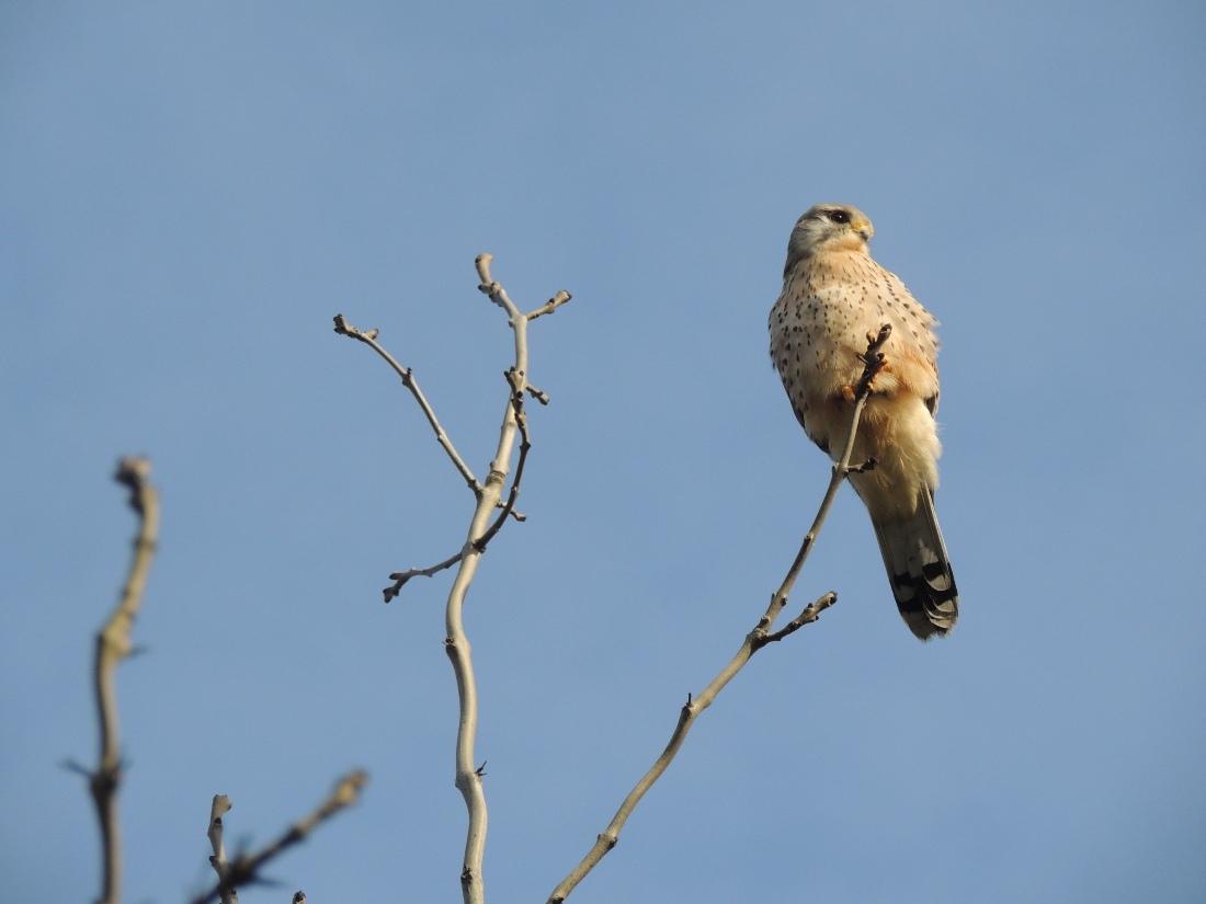 Pájaro UK - Foto por Ismael Rodríguez