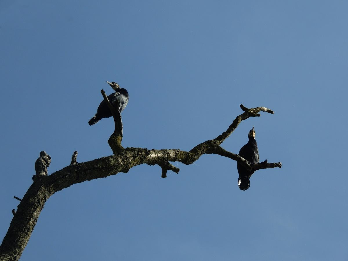 Voladores UK - Foto por Ismael Rodríguez
